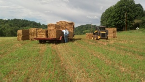 Rick loading straw bales while Tony looks on.