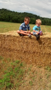 Maybe future wheat-growers, Waylan and Dylan.