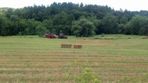 Neighbor Fred baling the straw.