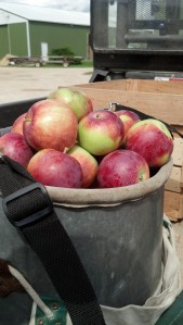 The apple-picking bucket