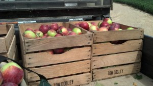 Apples from Licht's Orchard