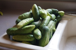 Beautiful cucumbers from the Evelands.