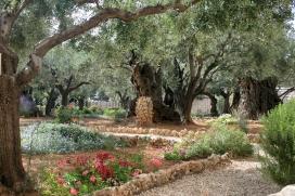 Garden of Gethsemene.jpg