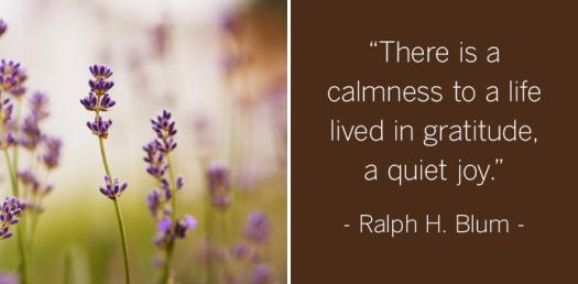 calmness in gratitude